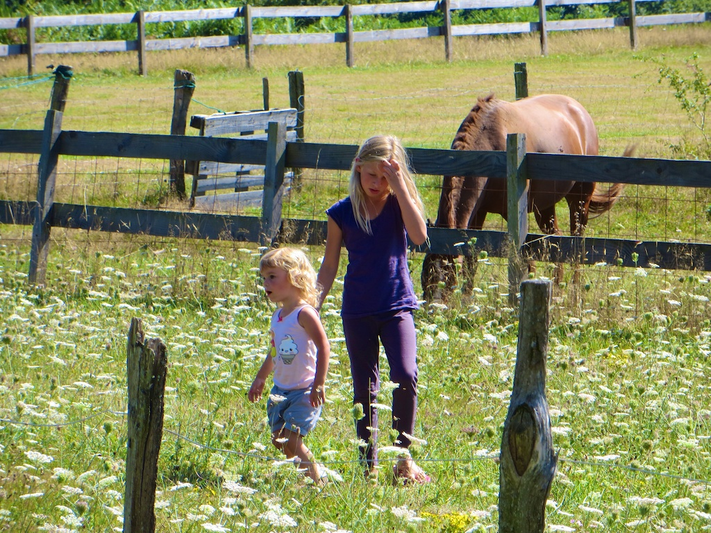 Visiting the horses