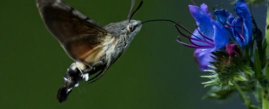 Bijzondere insecten op de camping